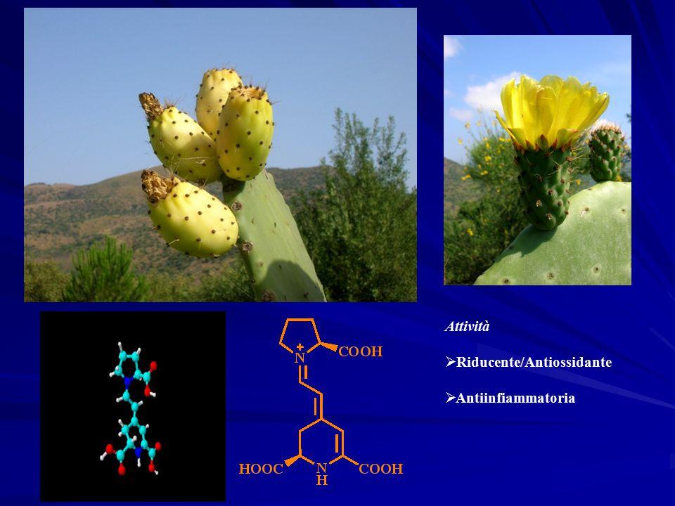 Attività  Riducente/Antiossidante  Antiinfiammatoria