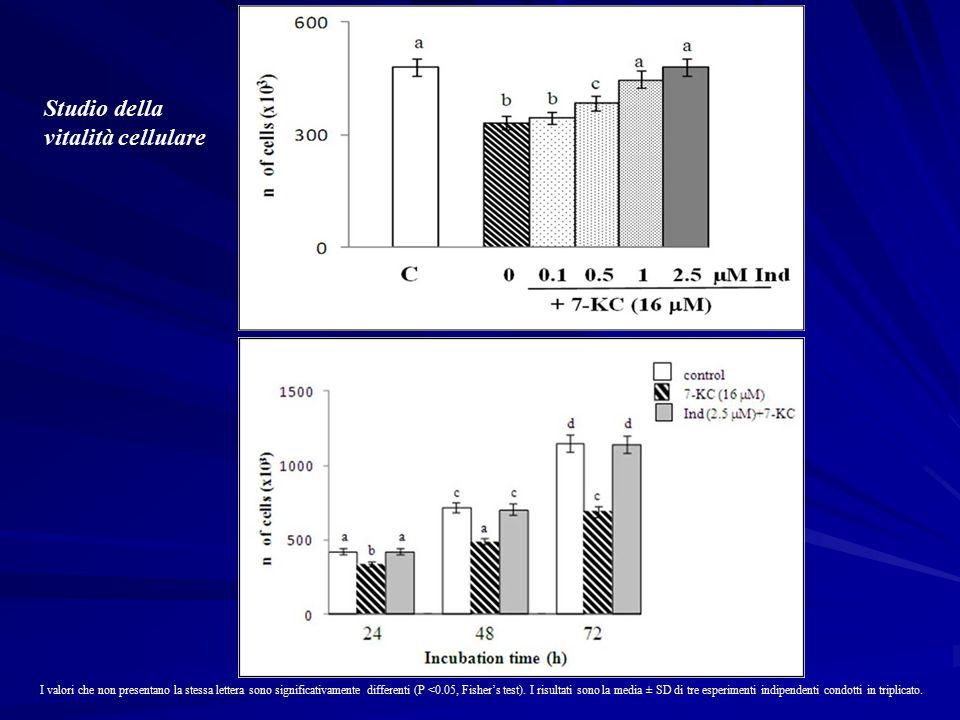 Studio della vitalità cellulare I valori che non presentano la stessa lettera sono significativamente differenti (P <0.05, Fisher's test).
