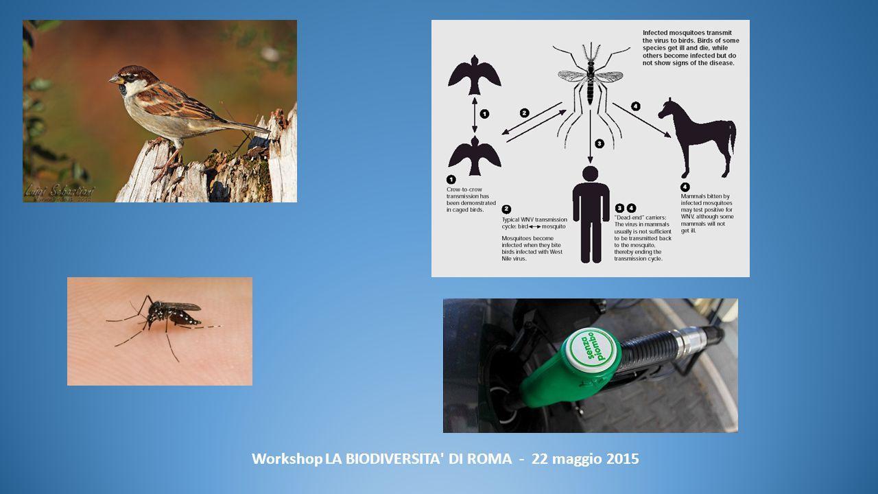 Workshop LA BIODIVERSITA DI ROMA - 22 maggio 2015