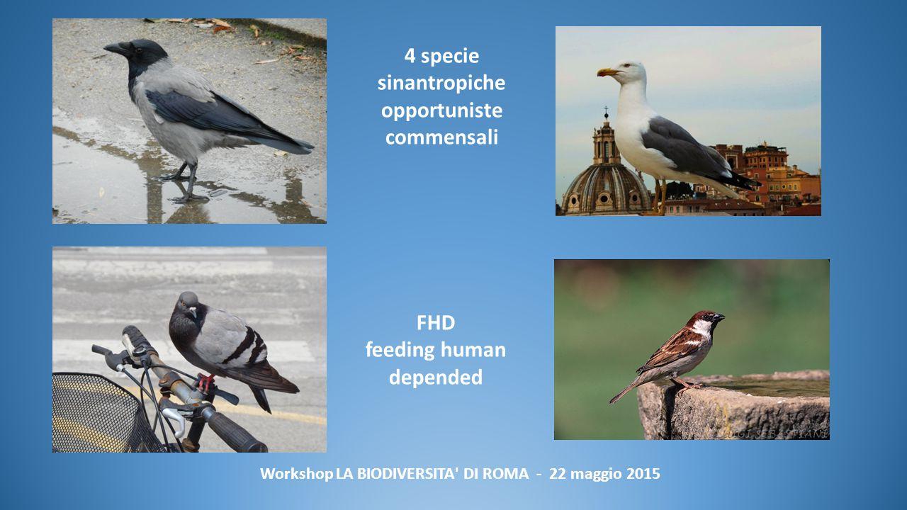 FHD feeding human depended 4 specie sinantropiche opportuniste commensali