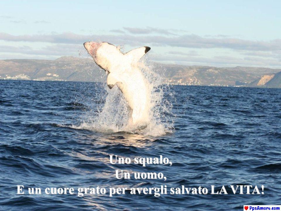 Uno squalo, Un uomo, E un cuore grato per avergli salvato LA VITA!