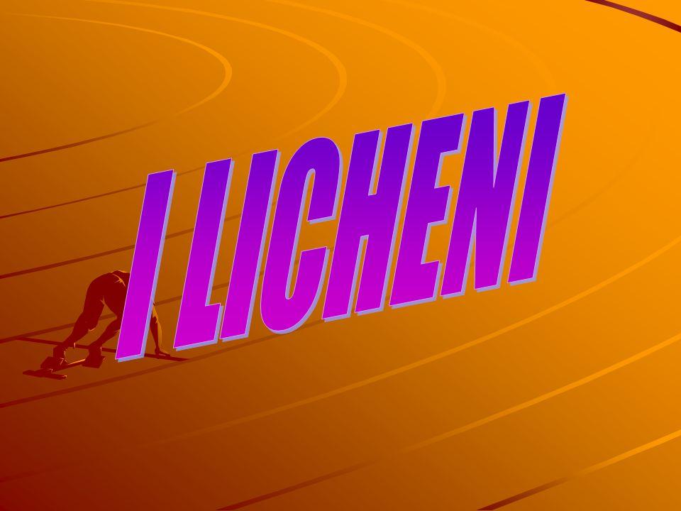 I licheni sono organismi simbiotici derivanti dall associazione di due individui: un organismo autotrofo, un cianobatterio o un alga, e un fungo, in genere un ascomicete o un basidiomicete.