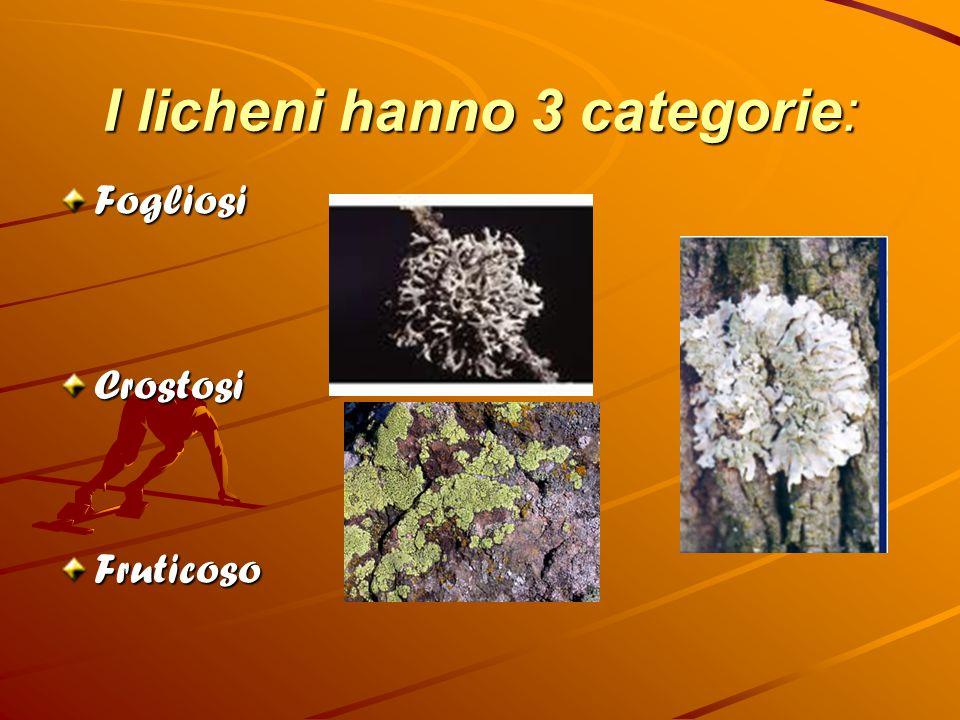 I licheni hanno 3 categorie: FogliosiCrostosiFruticoso