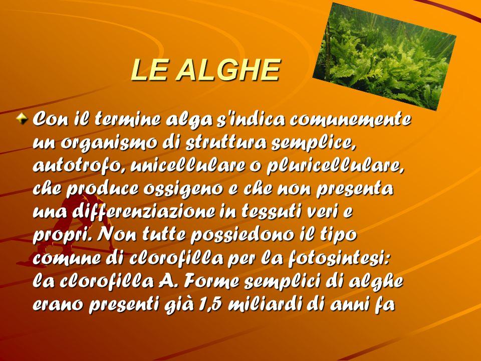 LE ALGHE Con il termine alga s'indica comunemente un organismo di struttura semplice, autotrofo, unicellulare o pluricellulare, che produce ossigeno e