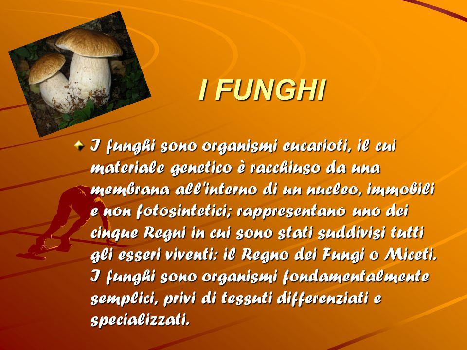 I FUNGHI I FUNGHI I funghi sono organismi eucarioti, il cui materiale genetico è racchiuso da una membrana all'interno di un nucleo, immobili e non fo