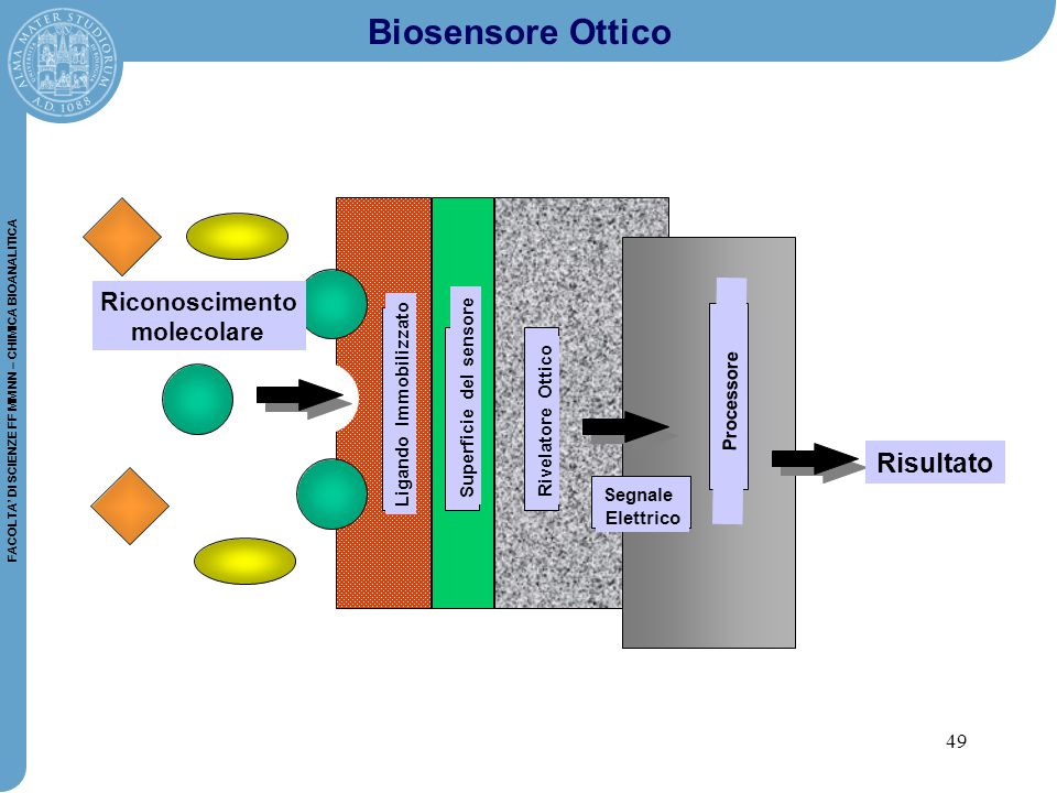 49 FACOLTA' DI SCIENZE FF MM NN – CHIMICA BIOANALITICA Ligando Immobilizzato Superficie del sensore Rivelatore Ottico Segnale Elettrico Processore Risultato Riconoscimento molecolare Biosensore Ottico