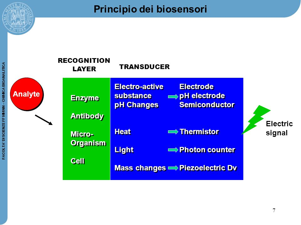 7 FACOLTA' DI SCIENZE FF MM NN – CHIMICA BIOANALITICA Principio dei biosensori Analyte Electric signal Enzyme Antibody Micro- Organism Cell Enzyme Antibody Micro- Organism Cell Electro-active substance pH Changes Heat Light Mass changes Electro-active substance pH Changes Heat Light Mass changes Electrode pH electrode Semiconductor Thermistor Photon counter Piezoelectric Dv Electrode pH electrode Semiconductor Thermistor Photon counter Piezoelectric Dv RECOGNITION LAYER TRANSDUCER