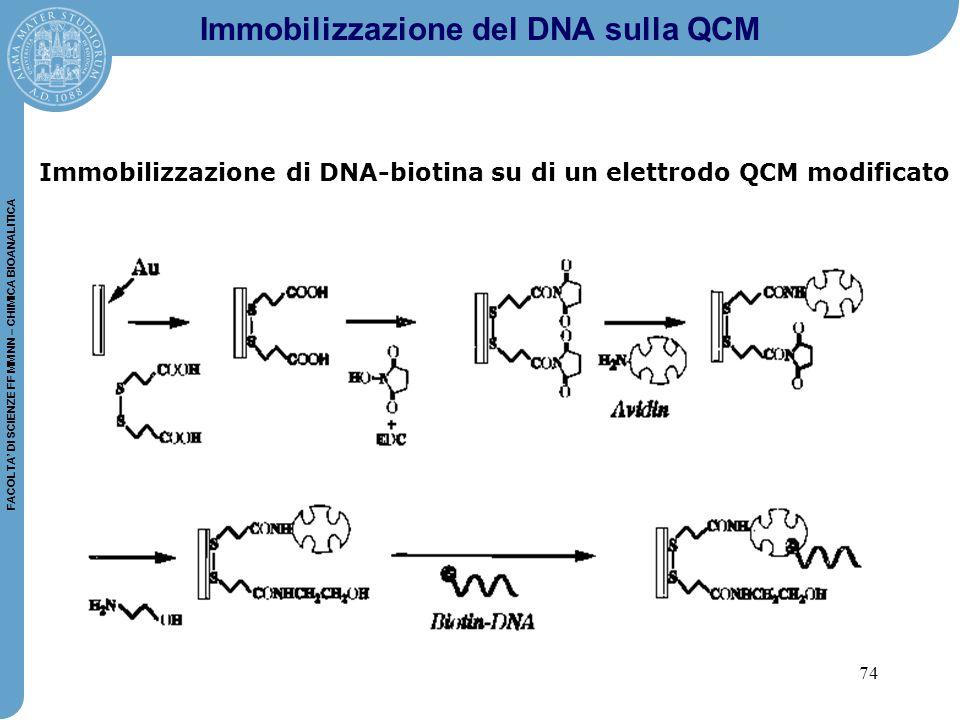 74 FACOLTA' DI SCIENZE FF MM NN – CHIMICA BIOANALITICA Immobilizzazione del DNA sulla QCM Immobilizzazione di DNA-biotina su di un elettrodo QCM modificato
