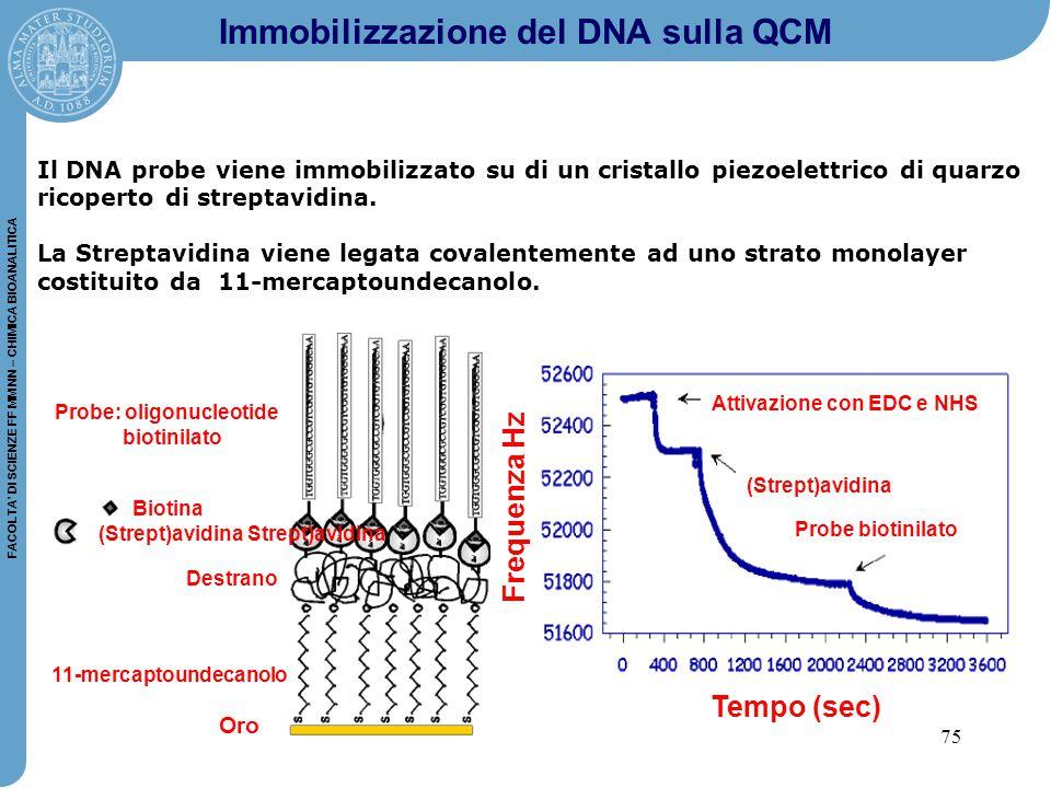 75 FACOLTA' DI SCIENZE FF MM NN – CHIMICA BIOANALITICA Il DNA probe viene immobilizzato su di un cristallo piezoelettrico di quarzo ricoperto di streptavidina.