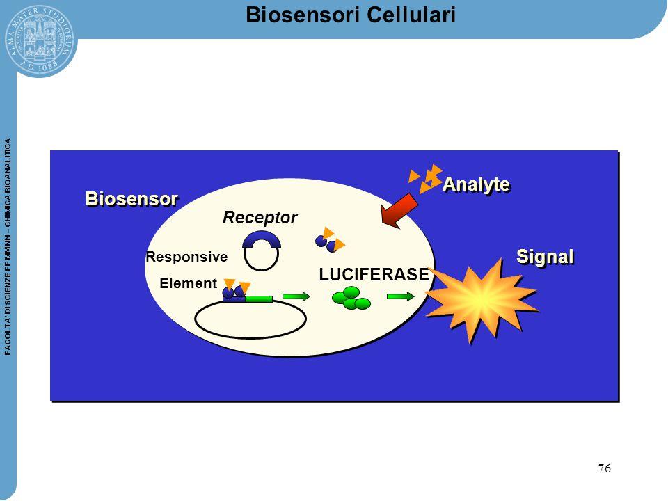 76 FACOLTA' DI SCIENZE FF MM NN – CHIMICA BIOANALITICA Biosensori Cellulari Receptor Responsive Element LUCIFERASE Analyte Signal Biosensor