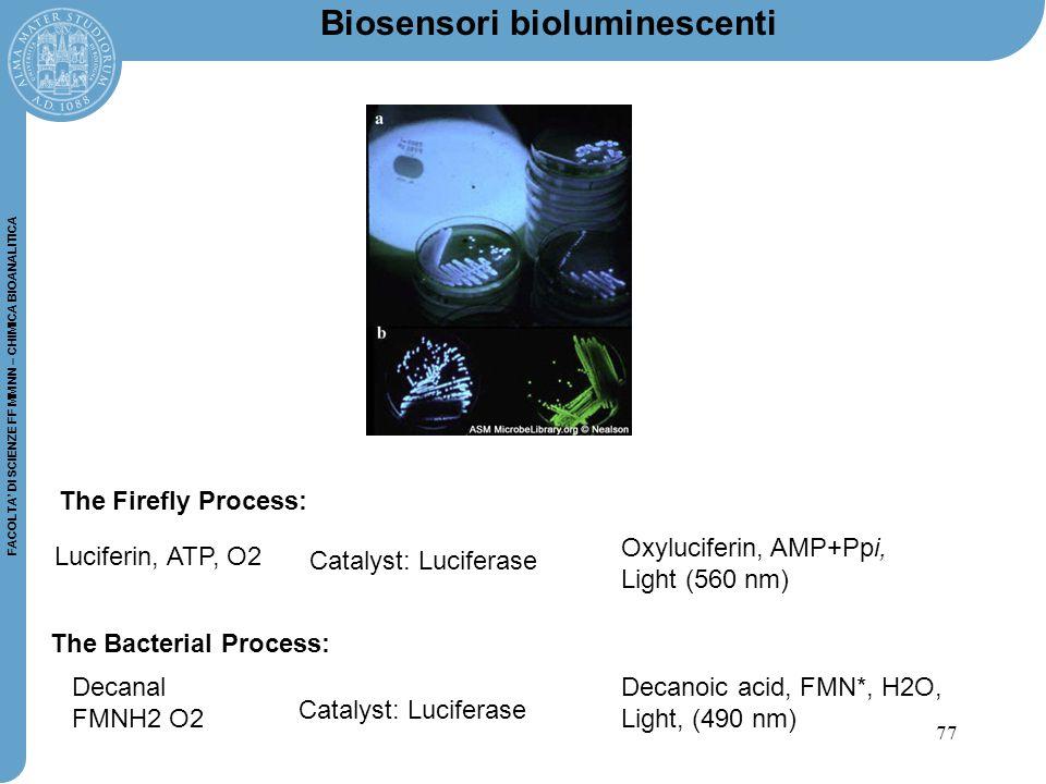 77 FACOLTA' DI SCIENZE FF MM NN – CHIMICA BIOANALITICA The Bacterial Process: Catalyst: Luciferase Decanal FMNH2 O2 Decanoic acid, FMN*, H2O, Light, (490 nm) The Firefly Process: Catalyst: Luciferase Luciferin, ATP, O2 Oxyluciferin, AMP+Ppi, Light (560 nm) Biosensori bioluminescenti