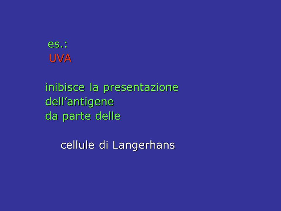 es.: UVA UVA inibisce la presentazione dell'antigene da parte delle cellule di Langerhans cellule di Langerhans