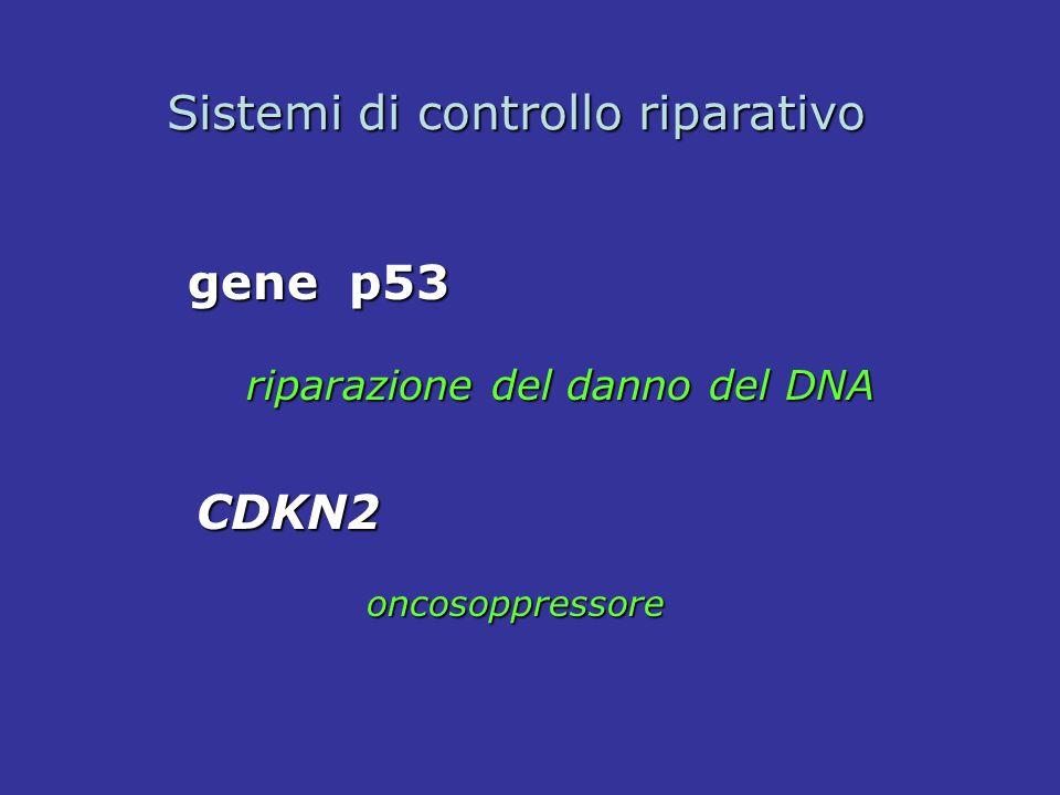 gene p53 riparazione del danno del DNA riparazione del danno del DNA Sistemi di controllo riparativo CDKN2 oncosoppressore oncosoppressore