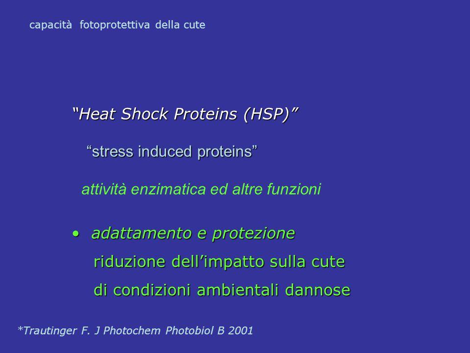"""""""Heat Shock Proteins (HSP)"""" """"stress induced proteins"""" """"stress induced proteins"""" attività enzimatica ed altre funzioni adattamento e protezione adattam"""