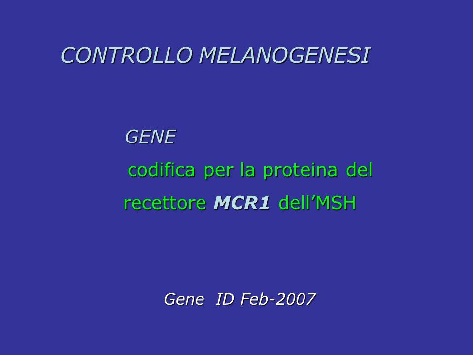 GENE GENE codifica per la proteina del codifica per la proteina del recettore MCR1 dell'MSH recettore MCR1 dell'MSH Gene ID Feb-2007 Gene ID Feb-2007