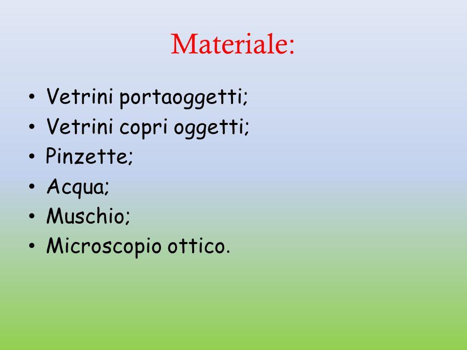 Materiale: Vetrini portaoggetti; Vetrini copri oggetti; Pinzette; Acqua; Muschio; Microscopio ottico.