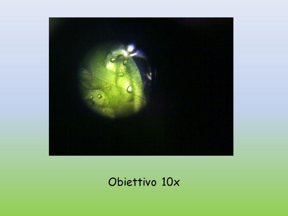Obiettivo 40x