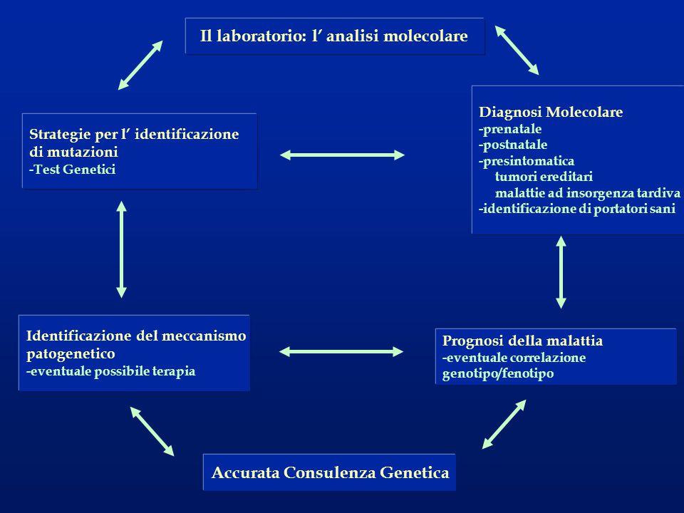 Il laboratorio: l' analisi molecolare Accurata Consulenza Genetica Diagnosi Molecolare -prenatale -postnatale -presintomatica tumori ereditari malatti