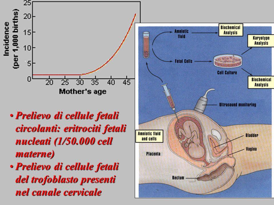 Prelievo di cellule fetali circolanti: eritrociti fetali nucleati (1/50.000 cell materne)Prelievo di cellule fetali circolanti: eritrociti fetali nucl