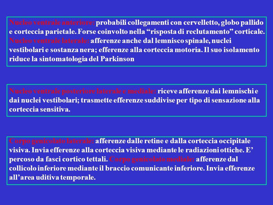 Nucleo ventrale posteriore laterale e mediale: riceve afferenze dai lemnischi e dai nuclei vestibolari; trasmette efferenze suddivise per tipo di sens