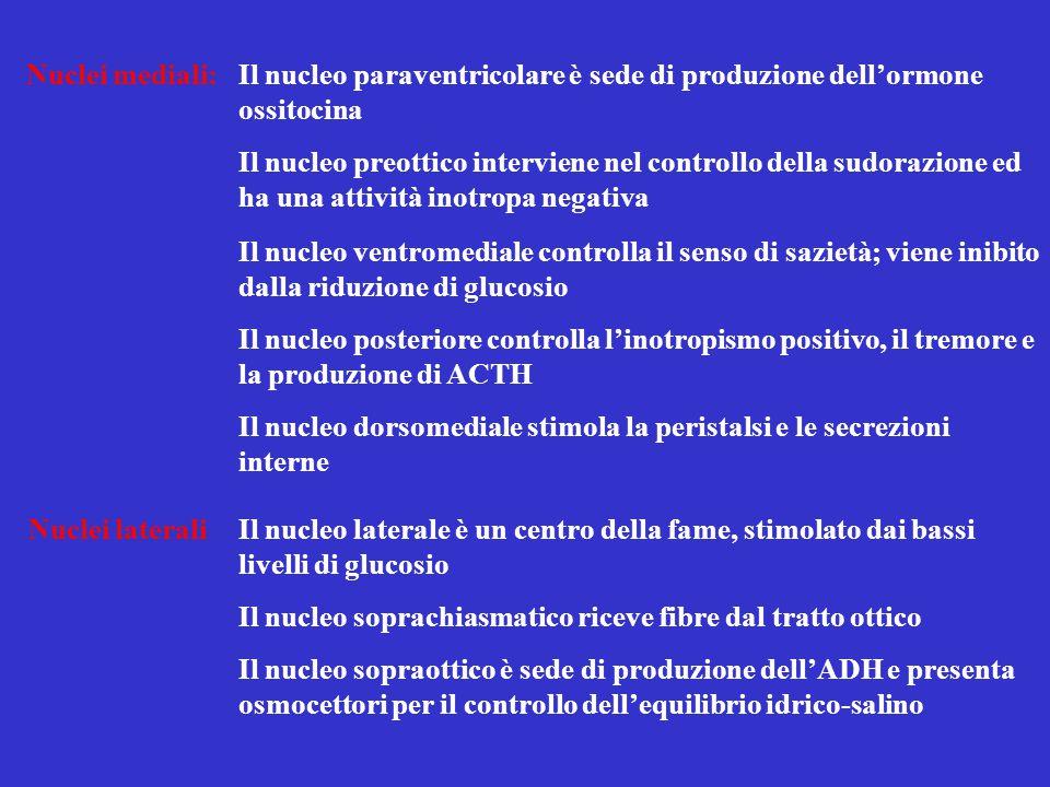 Nuclei mediali:Il nucleo paraventricolare è sede di produzione dell'ormone ossitocina Il nucleo preottico interviene nel controllo della sudorazione e
