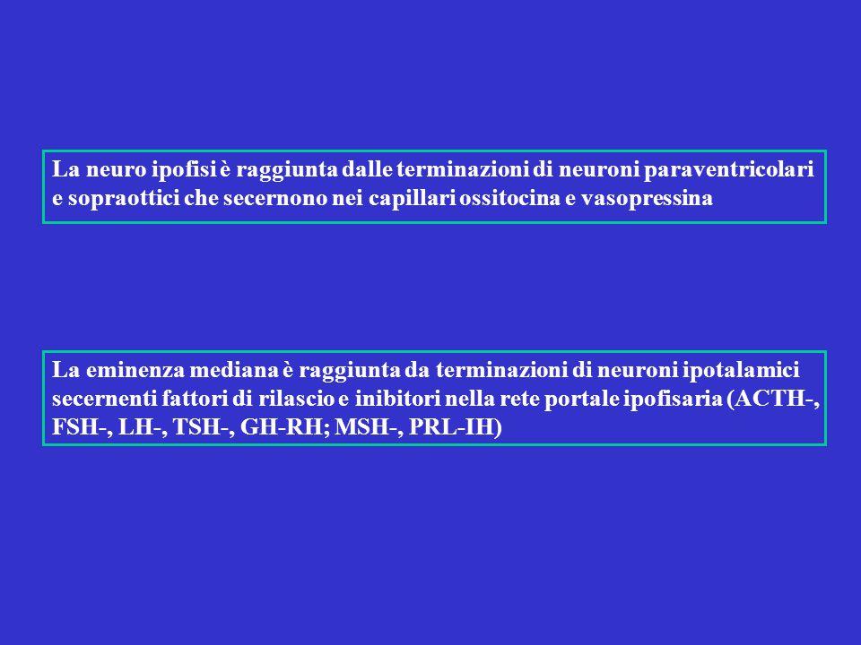 La neuro ipofisi è raggiunta dalle terminazioni di neuroni paraventricolari e sopraottici che secernono nei capillari ossitocina e vasopressina La emi