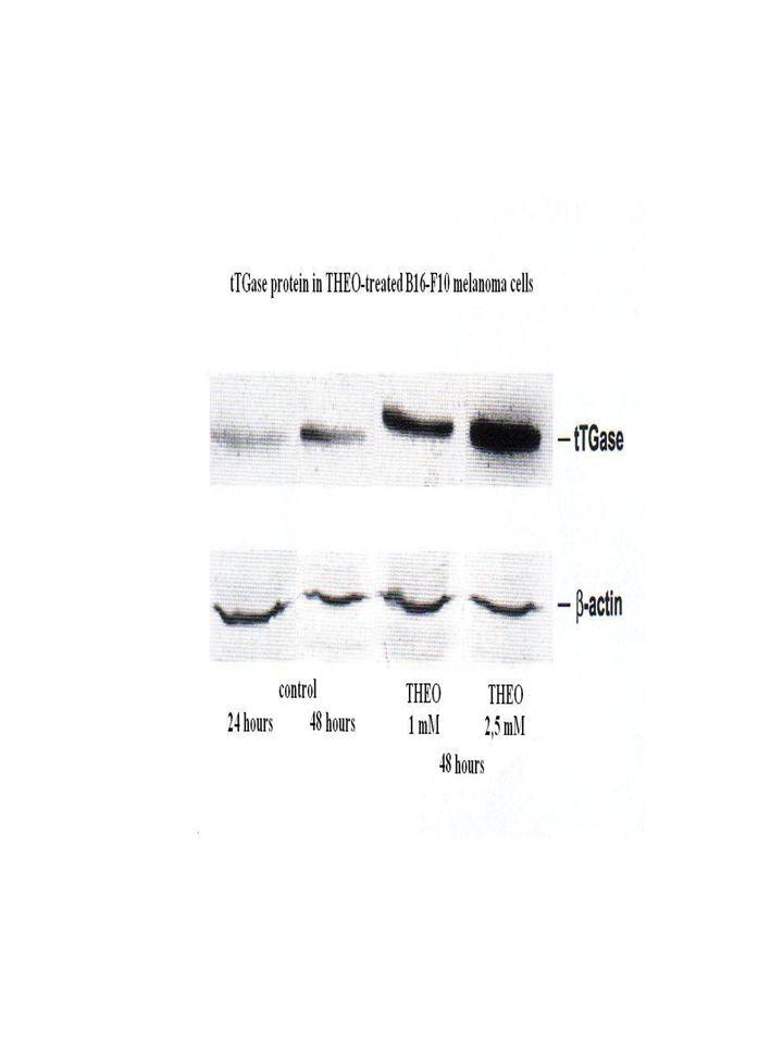 Controllo B16-F10 B16-F10 differenziate