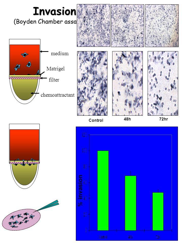 Invasion (Boyden Chamber assay) Invasion (Boyden Chamber assay) medium filter chemoattractant Matrigel % invasion Control 72hr 48h