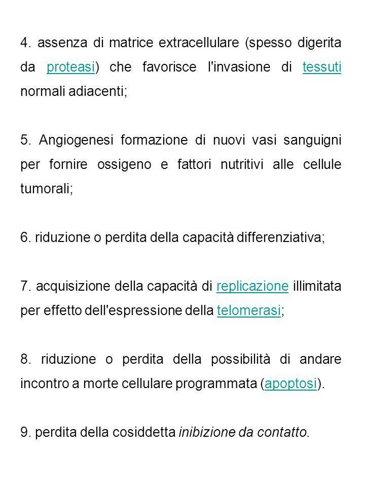 4. assenza di matrice extracellulare (spesso digerita da proteasi) che favorisce l'invasione di tessuti normali adiacenti;proteasitessuti 5. Angiogene