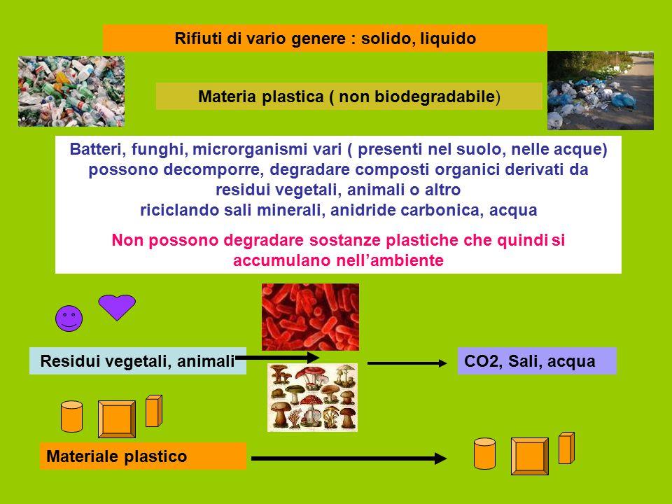 Rifiuti di vario genere : solido, liquido Materia plastica ( non biodegradabile) Batteri, funghi, microrganismi vari ( presenti nel suolo, nelle acque