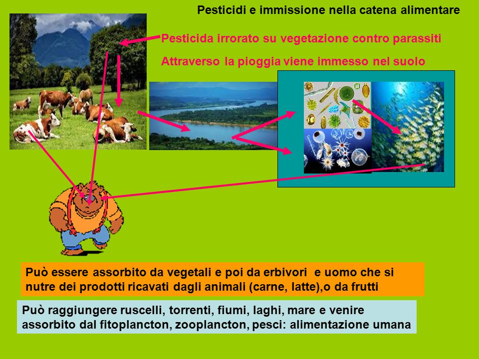 Pesticidi e immissione nella catena alimentare Pesticida irrorato su vegetazione contro parassiti Attraverso la pioggia viene immesso nel suolo Può es