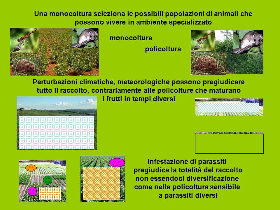 Una monocoltura seleziona le possibili popolazioni di animali che possono vivere in ambiente specializzato Infestazione di parassiti pregiudica la tot