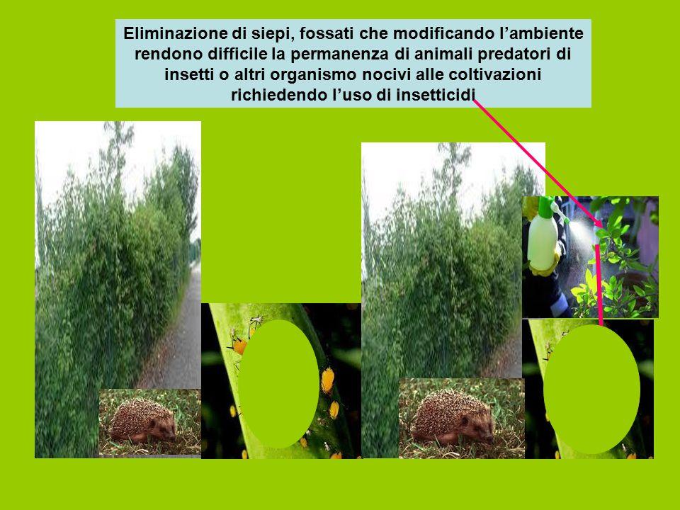 Eliminazione di siepi, fossati che modificando l'ambiente rendono difficile la permanenza di animali predatori di insetti o altri organismo nocivi all