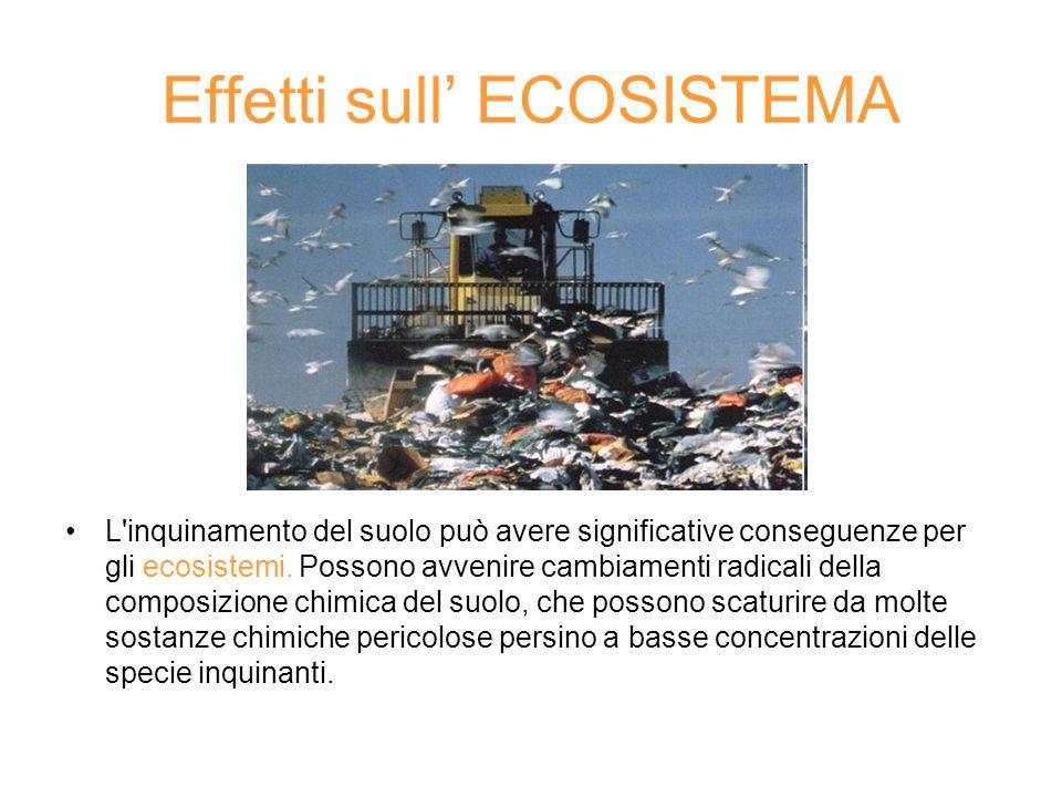 Effetti sull' ECOSISTEMA L'inquinamento del suolo può avere significative conseguenze per gli ecosistemi. Possono avvenire cambiamenti radicali della