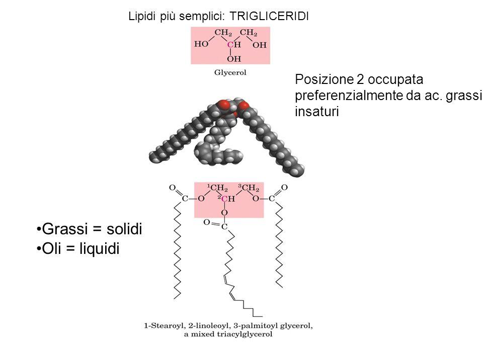 Lipidi più semplici: TRIGLICERIDI Posizione 2 occupata preferenzialmente da ac. grassi insaturi Grassi = solidi Oli = liquidi