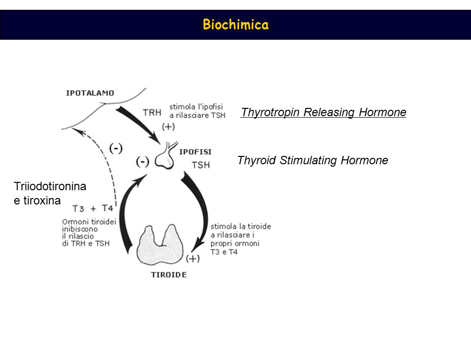Biochimica Thyroid Stimulating Hormone Thyrotropin Releasing Hormone Triiodotironina e tiroxina