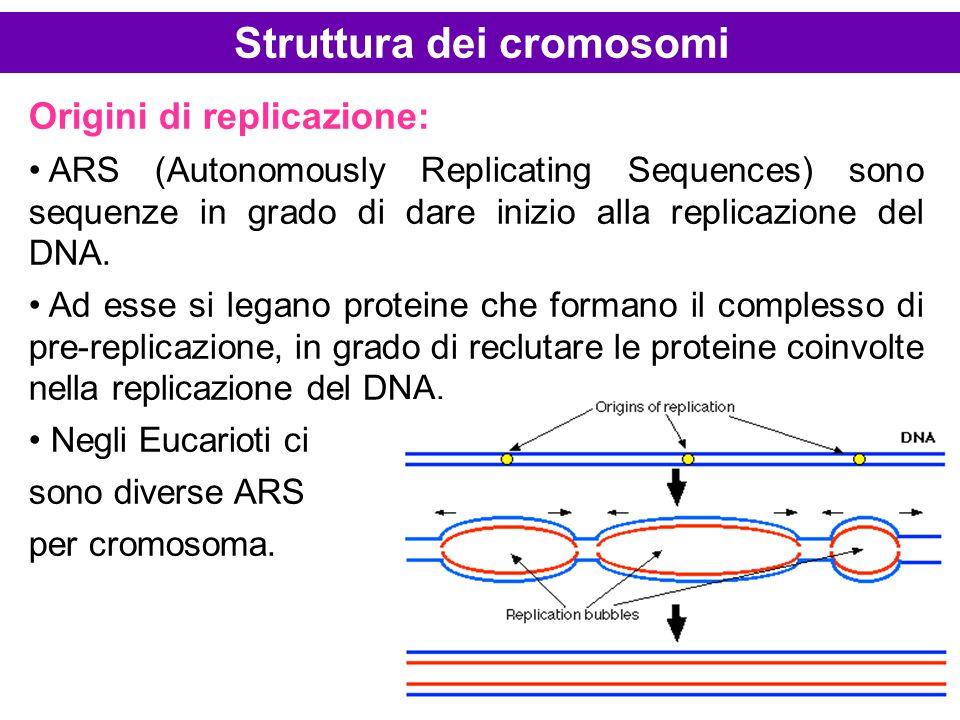 Origini di replicazione: ARS (Autonomously Replicating Sequences) sono sequenze in grado di dare inizio alla replicazione del DNA. Ad esse si legano p