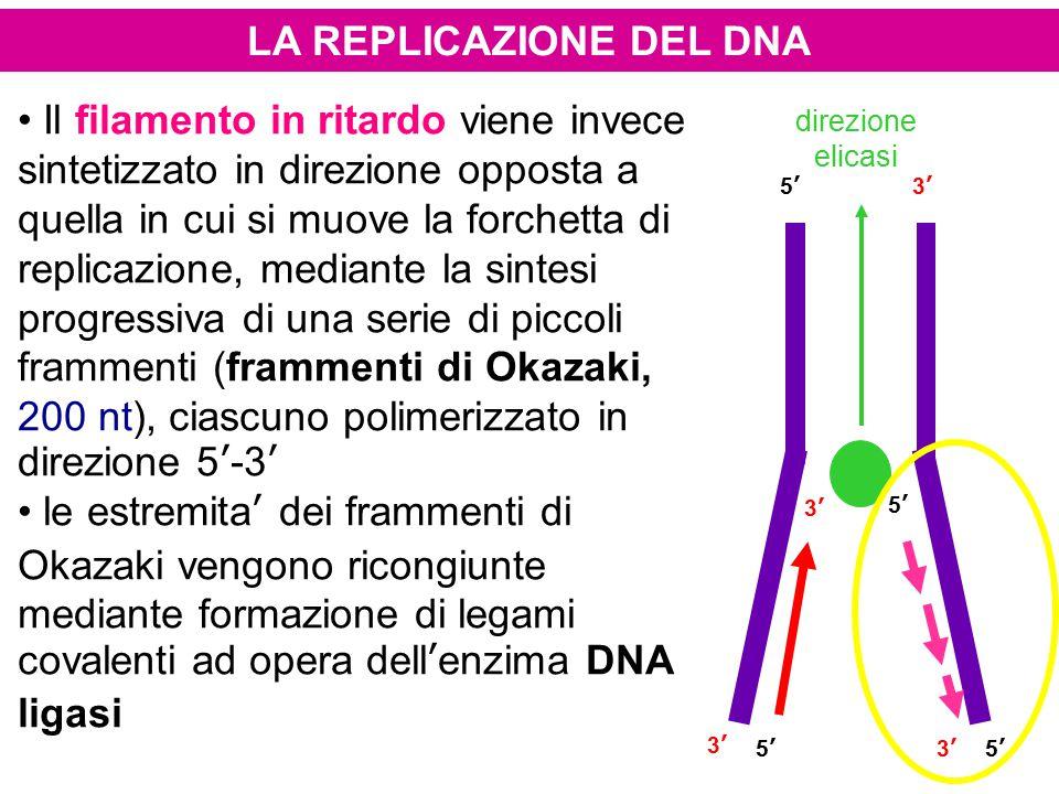 LA REPLICAZIONE DEL DNA Il filamento in ritardo viene invece sintetizzato in direzione opposta a quella in cui si muove la forchetta di replicazione,