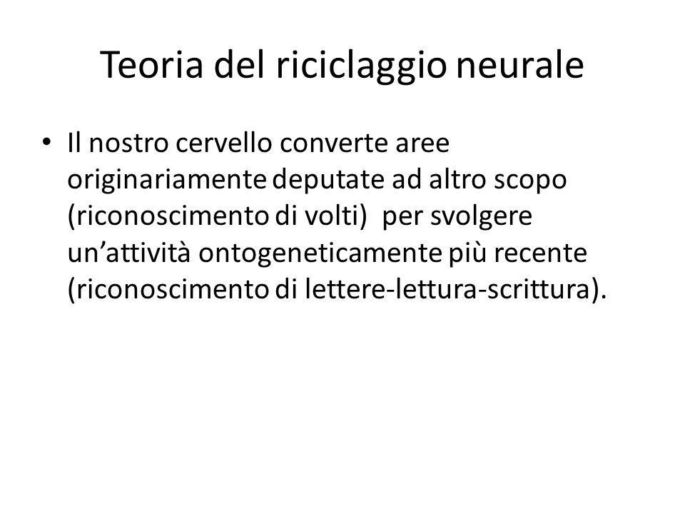 Teoria del riciclaggio neurale Il nostro cervello converte aree originariamente deputate ad altro scopo (riconoscimento di volti) per svolgere un'atti