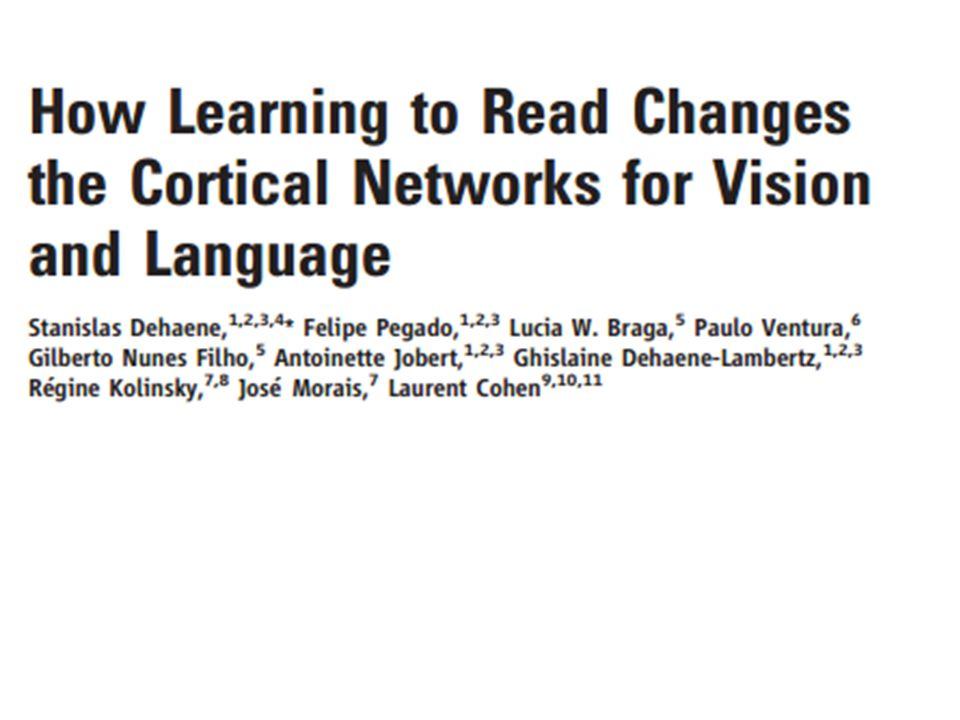 Dehaene 2010 Periodo critico L'apprendimento della lettura dopo la pubertà comporta variazioni in aree analoghe nel cervello MA in misura diversa rispetto a quando avviene in età evolutiva.