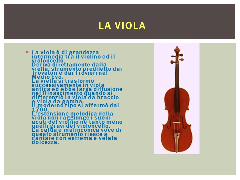 LA VIOLA  La viola è di grandezza intermedia tra il violino ed il violoncello. Deriva direttamente dalla viella, strumento prediletto dai Trovatori e