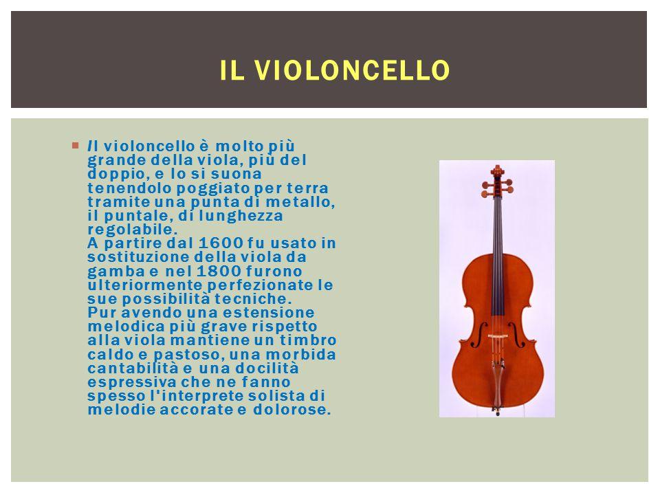 IL VIOLONCELLO  Il violoncello è molto più grande della viola, più del doppio, e lo si suona tenendolo poggiato per terra tramite una punta di metall