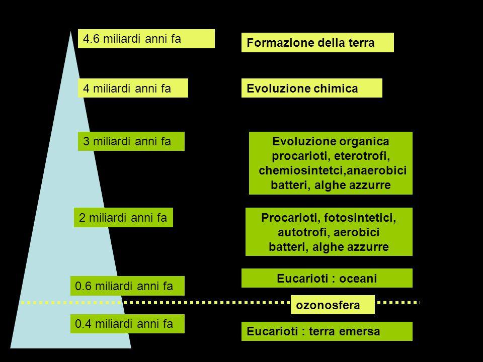 Con il nome di fauna di Ediacara si intende un complesso di forme di vita pluricellulare risalenti al Proterozoico superiore (tra 620 e 550 milioni di