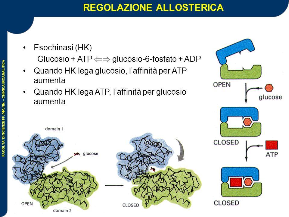 REGOLAZIONE ALLOSTERICA Enzimi che regolano la tappa più lenta dell'intero processo enzimatico sono a loro volta regolati da un effettore=molecola o cofattore Processi (positivi e negativi) reversibili Esempio di allosterismo positivo