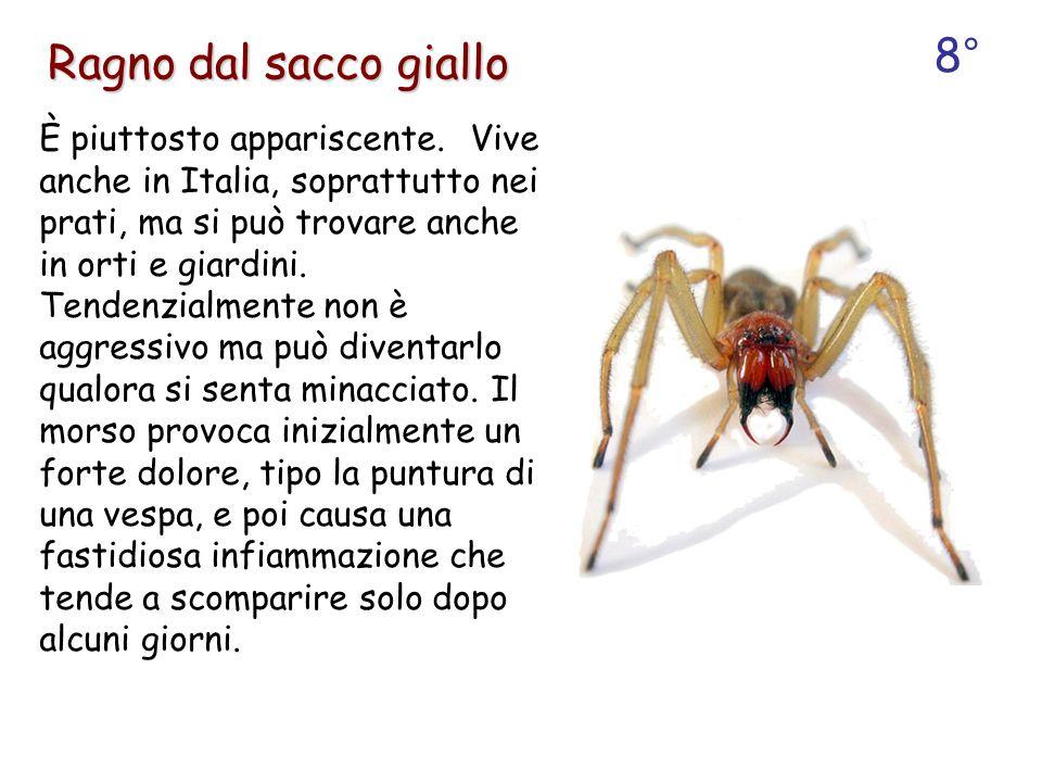 È piuttosto appariscente. Vive anche in Italia, soprattutto nei prati, ma si può trovare anche in orti e giardini. Tendenzialmente non è aggressivo ma