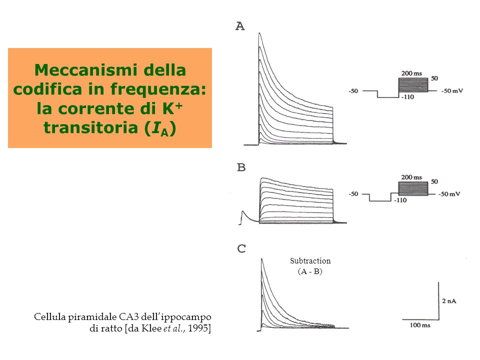 Meccanismi della codifica in frequenza: la corrente di K + transitoria (I A ) Cellula piramidale CA3 dell'ippocampo di ratto [da Klee et al., 1995] Su