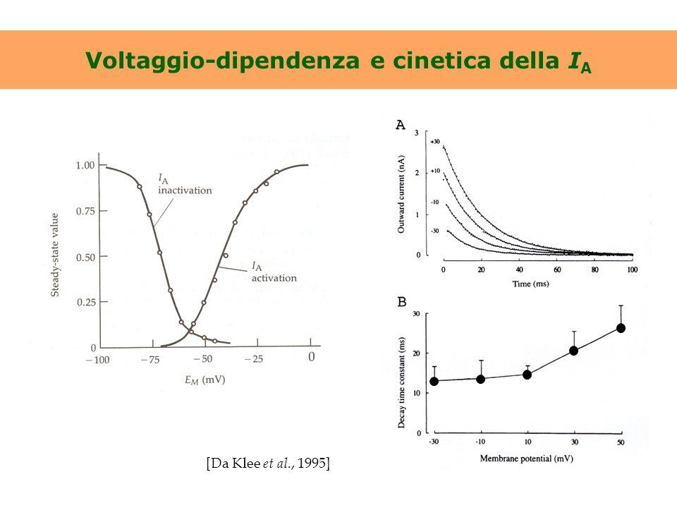 Voltaggio-dipendenza e cinetica della I A [Da Klee et al., 1995]