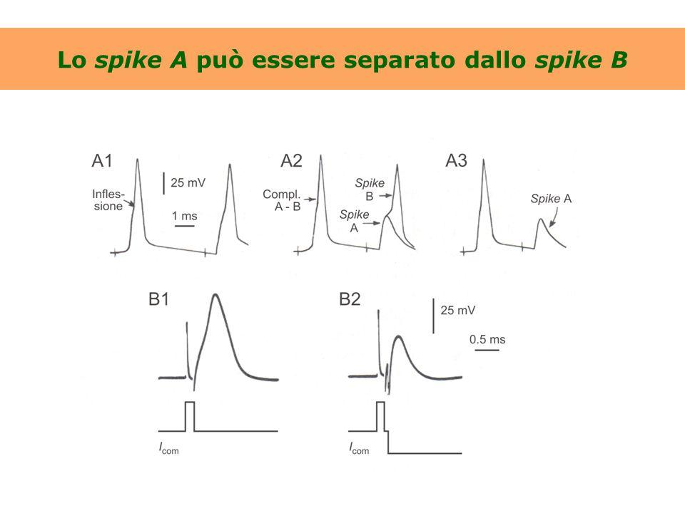 Lo spike A può essere separato dallo spike B