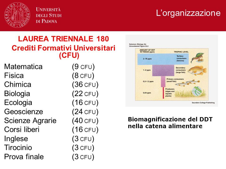 L'organizzazione LAUREA TRIENNALE 180 Crediti Formativi Universitari (CFU) Matematica (9 CFU ) Fisica (8 CFU ) Chimica (36 CFU ) Biologia (22 CFU ) Ecologia (16 CFU ) Geoscienze (24 CFU ) Scienze Agrarie (40 CFU ) Corsi liberi (16 CFU ) Inglese (3 CFU ) Tirocinio (3 CFU ) Prova finale (3 CFU ) Biomagnificazione del DDT nella catena alimentare