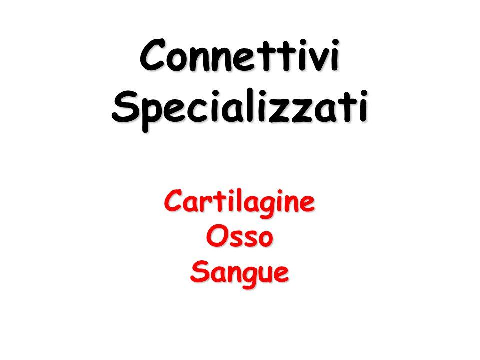 ConnettiviSpecializzatiCartilagineOssoSangue